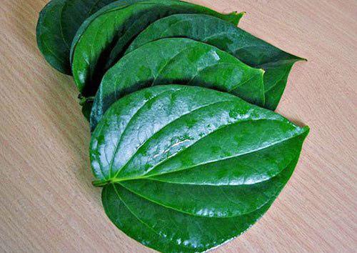 chữa viêm phụ khoa bằng lá cây